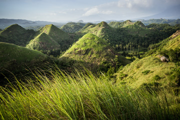 Chocolate Hills in the Bohol province of the Philippines. Famous tourist attraction. Green grass in front. Travel Background. Nature landscape. Holiday, hiking, sport, recreation