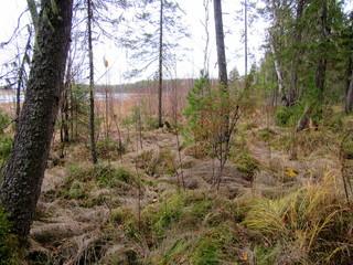 Река Колонга и лес.