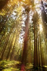Bautiful Forest in Autumn Season and Sunlight