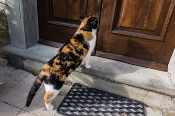 gatta alla porta di casa