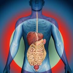 3d render of gastric system
