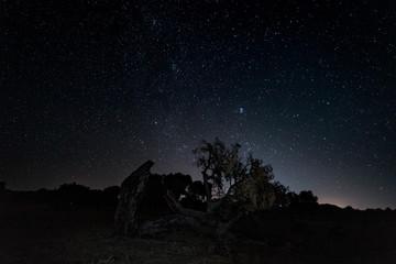 Night landscape with fallen tree.