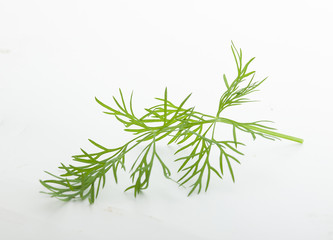 Fresh green branch of dill