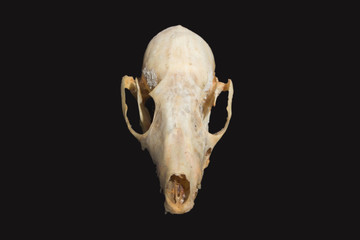 skull animals on background dark