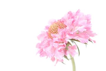 Floaty Pink Flower