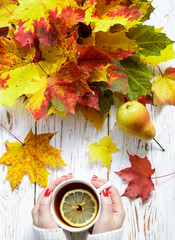 Women's hands holding a Cup of hot tea with lemon on a white wooden table with colorful autumn leaves. Fall concept. Selective focus