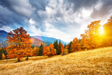 Foto op Plexiglas Oranje Mountain autumn landscape with colorful forest