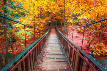 Autumn foliage and wooden bridge in the forest. Colorful leafs. Beautiful colors of autumn. Uludag National Park, Bursa.