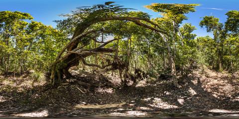 Spider Web, Bushwalk Path, Castaway Island Resort, Qalito Island, Fiji