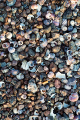 Sea shore texture background with little stones and shells in light of setting sun,  selective focus