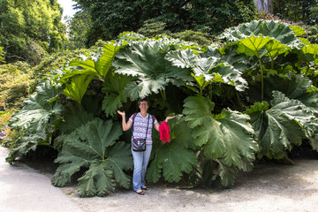 Folhas gigantes