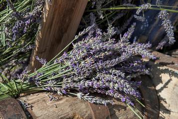 Lavender flowers  captured on a lavender festival in south of France