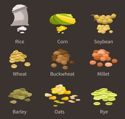 ereals and legumes of various agricultural types of culture. Barley and wheat, rice and buckwheat, millet and pea, chickpea. Grain and beans.