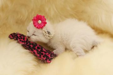 newborn gato