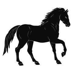 Black horse with saddle isolated on white background.