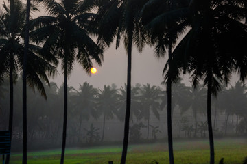Early morning sunrise seen among the palm trees