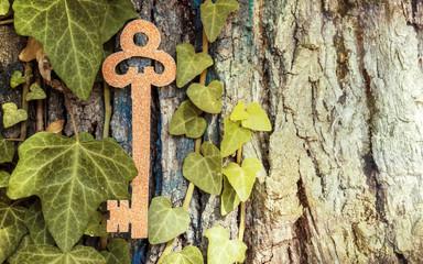Golden Key hidden in the tree