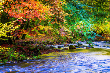 Autumn leaves red and yellow hang over a flowing river