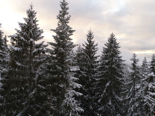 aerial view of fresh snow covered winter forest in high mountains in sunset on christmas eve