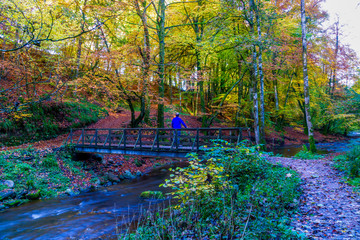 in autumn  forest  man stands on a wooden bridge.