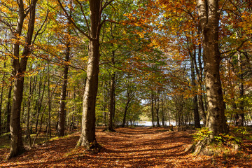 Scenic path through the woods in autumn
