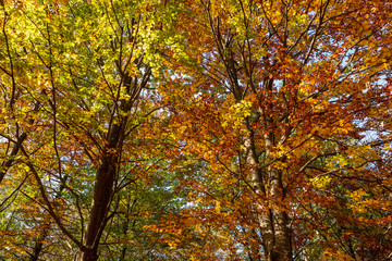 Colorful tree crowns in the woods in autumn