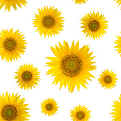 Seamless pattern with big bright sunflowers on yellow background
