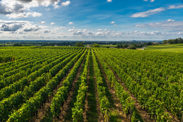 Bordeaux vineyards beautiful landscape of Saint Emilion vineyrd in France Wall mural