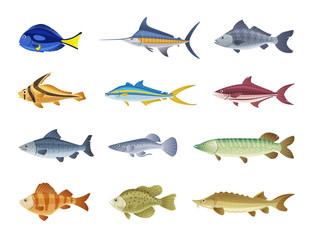 Fish characters. Cartoon vector illustration
