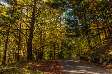 Scenic road through the woods in autumn