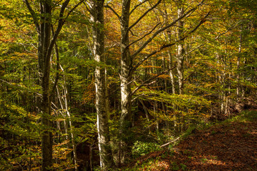 The wood during fall season