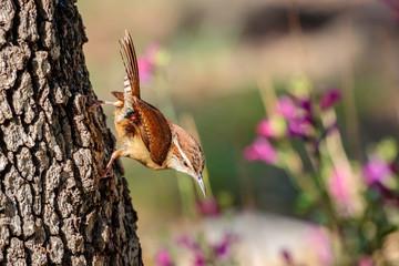 Wren hanging on the tree bark
