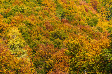 Trees in the fall, natural patterns and autumnal background