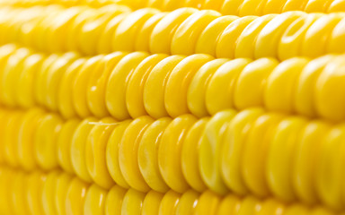 Macro view of fresh yellow sweet corn or maize Wall mural