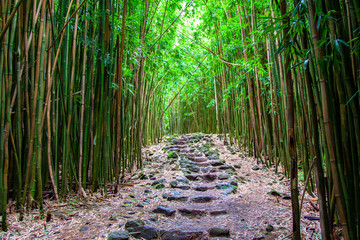 Stone steps at Pipiwai trail at bamboo forest, Maui