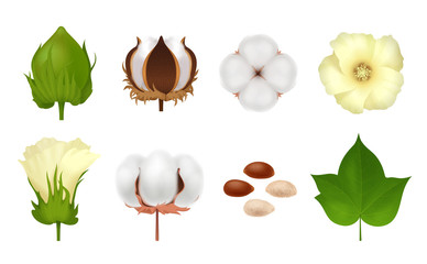Cotton Realistic Icon Set