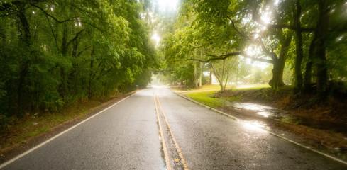 Georgia Farm Road Through Low Hanging Trees in the Rain