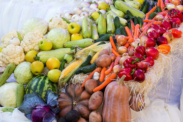 Vegetables and fruits set out in a row during the Thanksgiving holiday_