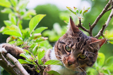 Cat climbing  up into an apple tree
