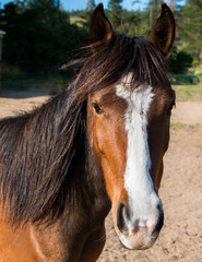 Close up of a brown horse head with white stripe facing the camera.