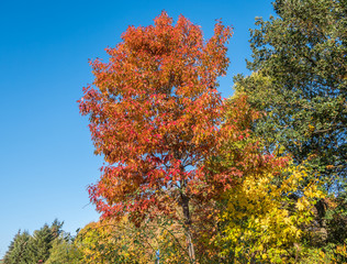 Bunte Laubbäume im Herbst