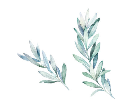 Watercolor olive branch. Hand drawn winter illustration
