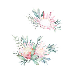 Watercolor botanical set. Hand drawn floral isolated illustration. Protea, fern and eucalyptus branch
