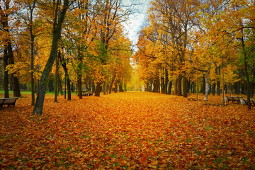 bright, beautiful, colorful autumn park