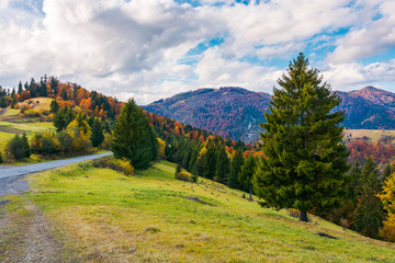 beautiful autumn countryside. lovely location of Carpathian mountains. gorgeous weather conditions