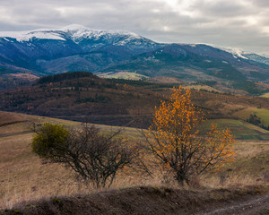 Carpathian countryside in november. hills with weathered grass and distant mountain with snowy top on an overcast day