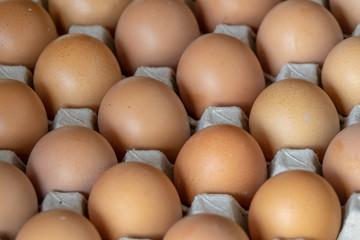 Closeup chicken eggs
