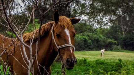 Beautiful brown horse on the farm lawn