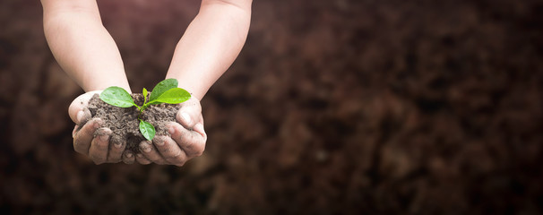 Fototapeta World environment day concept: Human hands holding seed tree with soil on blurred agriculture field background obraz