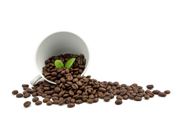Coffee beans  in coffee cup